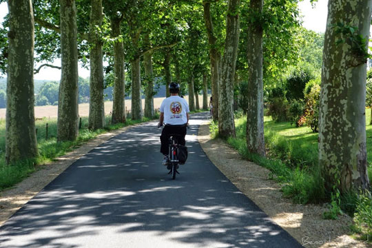 Une charmante route bordée de platanes